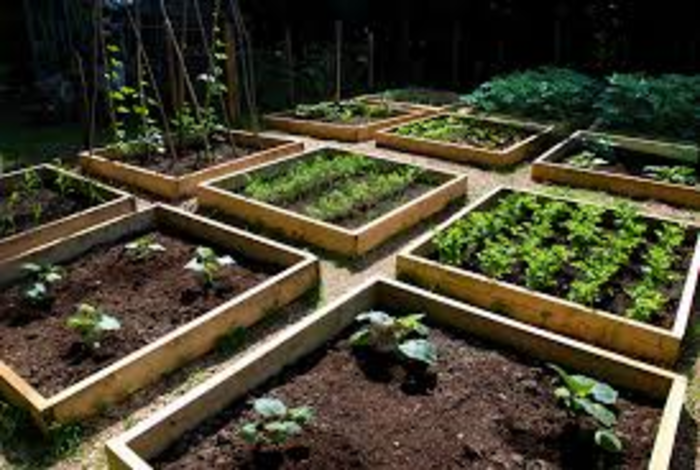 raised beds
